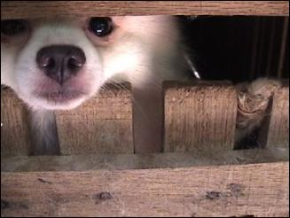 Please don't buy from pet shops & puppy mills!